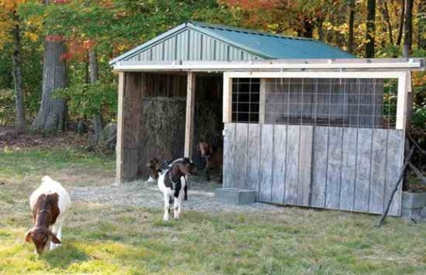 DIY animal shelter plans