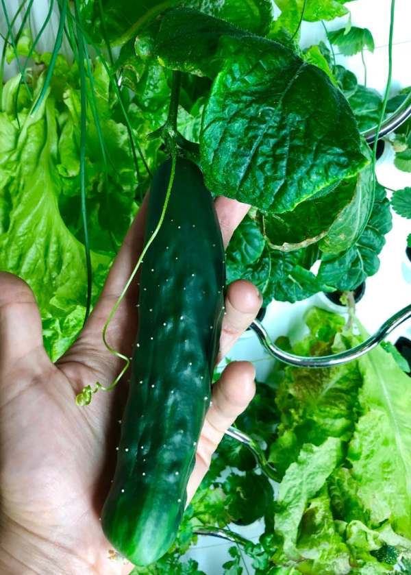 growing fruits and vegetable indoor