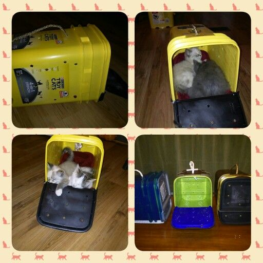 DIY Old Bucket Pet Carrier