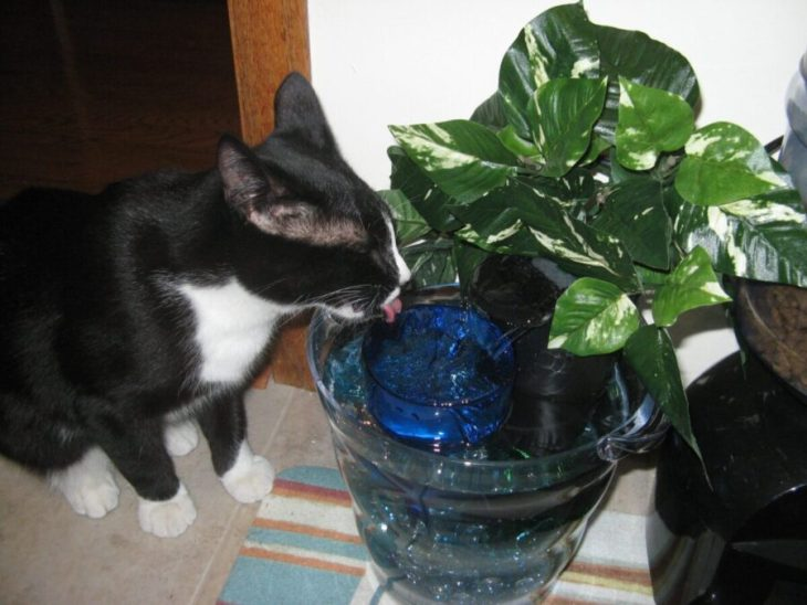 glass bowl cat fountain