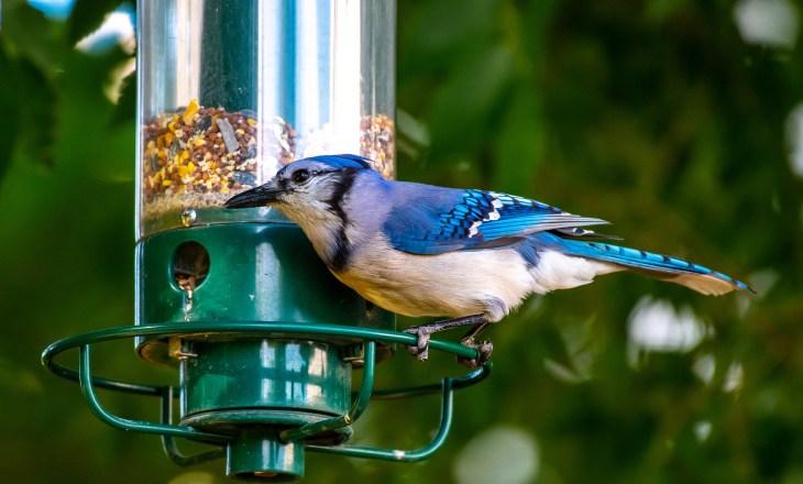 bird feeders for small birds