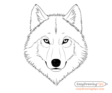 Wolf face fur drawing
