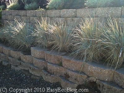 Drought Tolerant Plants Water Conservation Xeriscaping