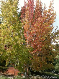 fall leaves, autumn colors, tree with orange and yellow leaves