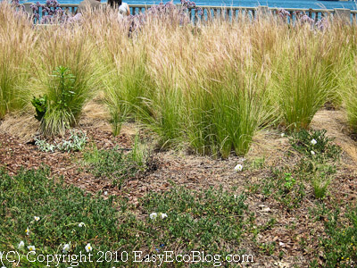 drought tolerant plants, xeriscaping, native grasses