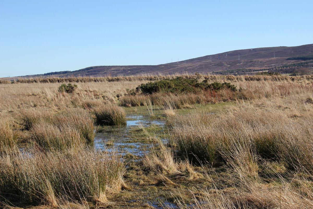 Boggy Culodden Moor