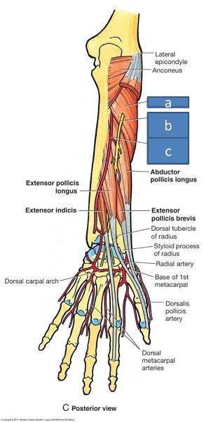 Index Finger Nerve Block