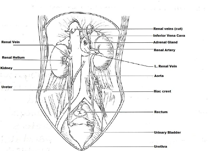Anatomy And Physiology Coloring Workbook Answer Key