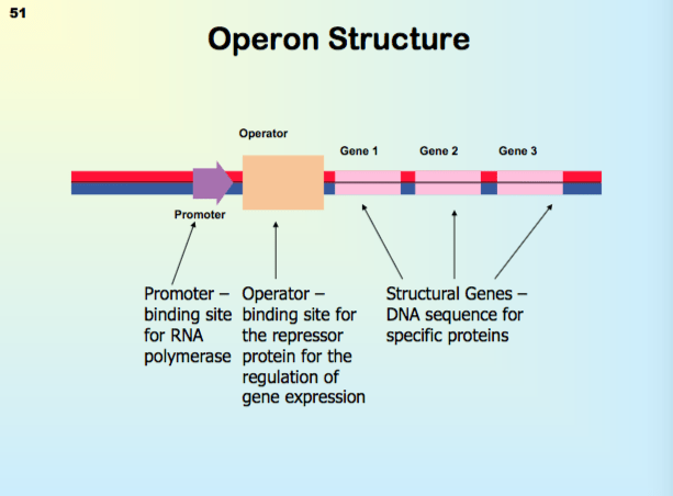 Active Repressor Operon Active Activator