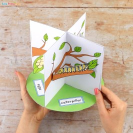 3D Butterfly Life Cycle Craft - Easy Peasy and Fun