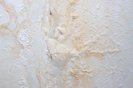 togliere la muffa dai muri