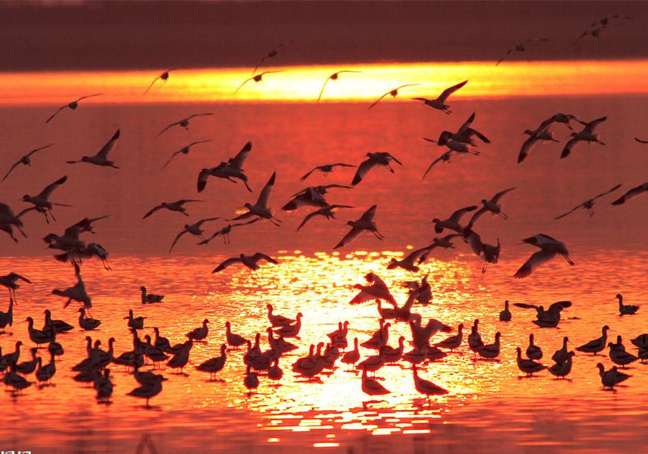 Dongting Lake Birds
