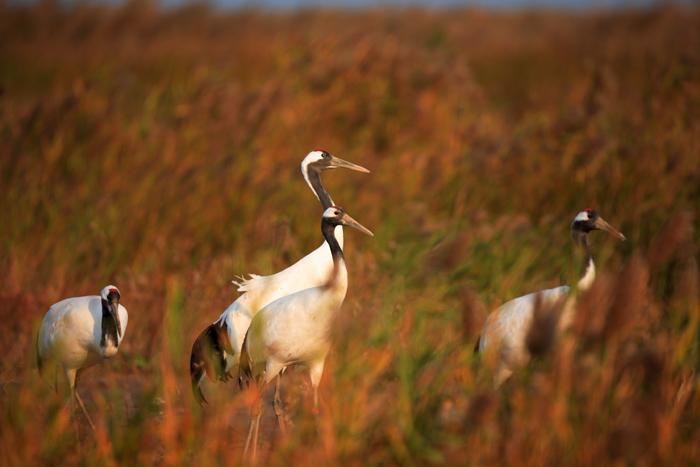 Yancheng Wetland birding