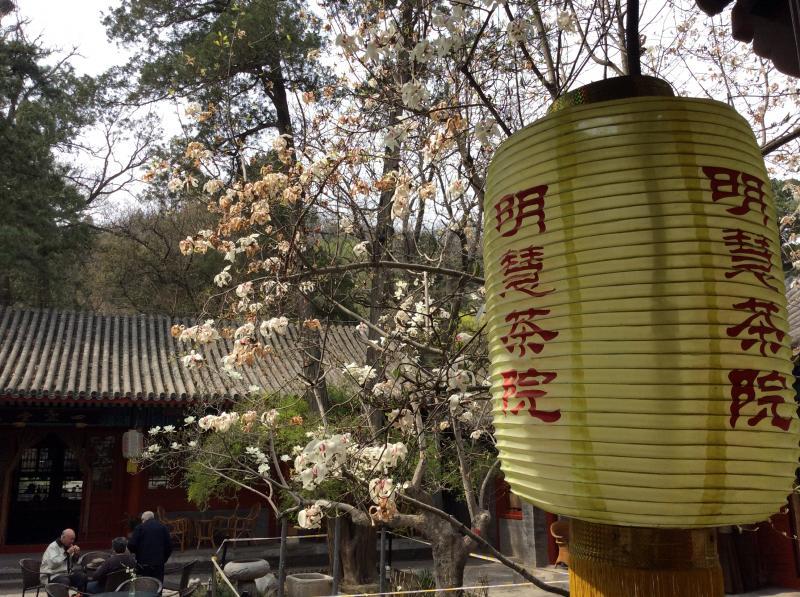 Best China tea shops