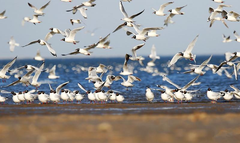 Best Locations for birding