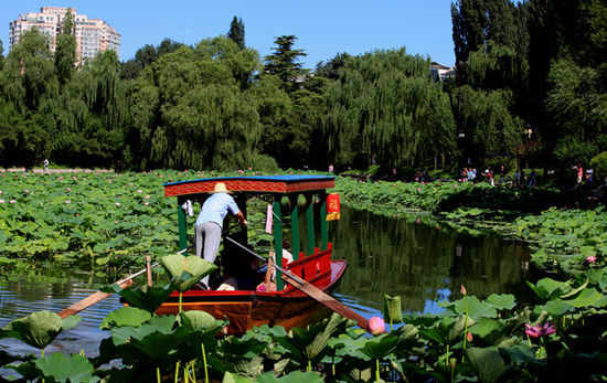 Lotus pond in Beijing