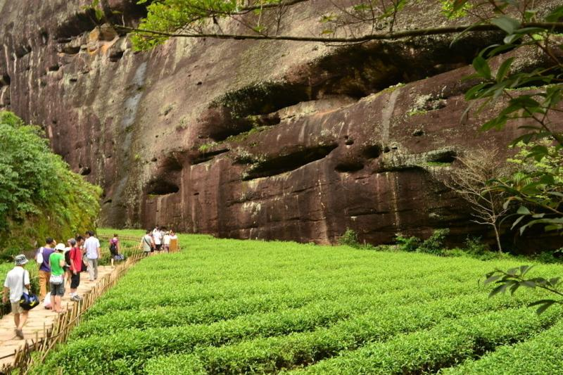 China tea culture experience and tours