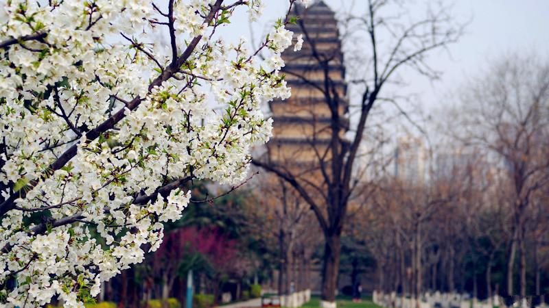 China Xian bus tour