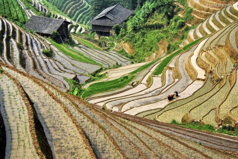 Longji rice terraces tour
