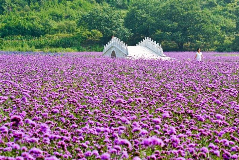 Ocean Of Flowers Scenic Spot