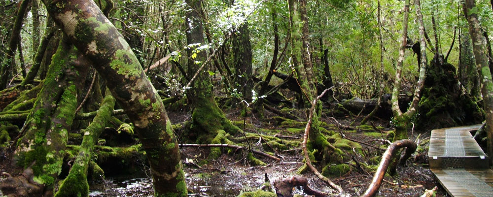 Walks in the Cradle Mountain National Park