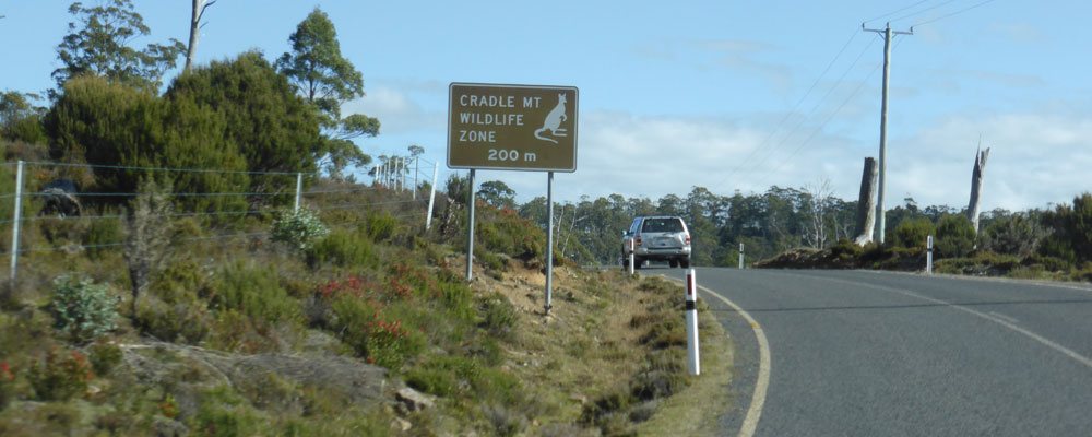 Be aware of Tasmania's Wildlife on the Roads at Dawn and Dusk
