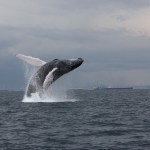 View Of Whales