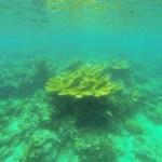 Snorkeling in Portobello