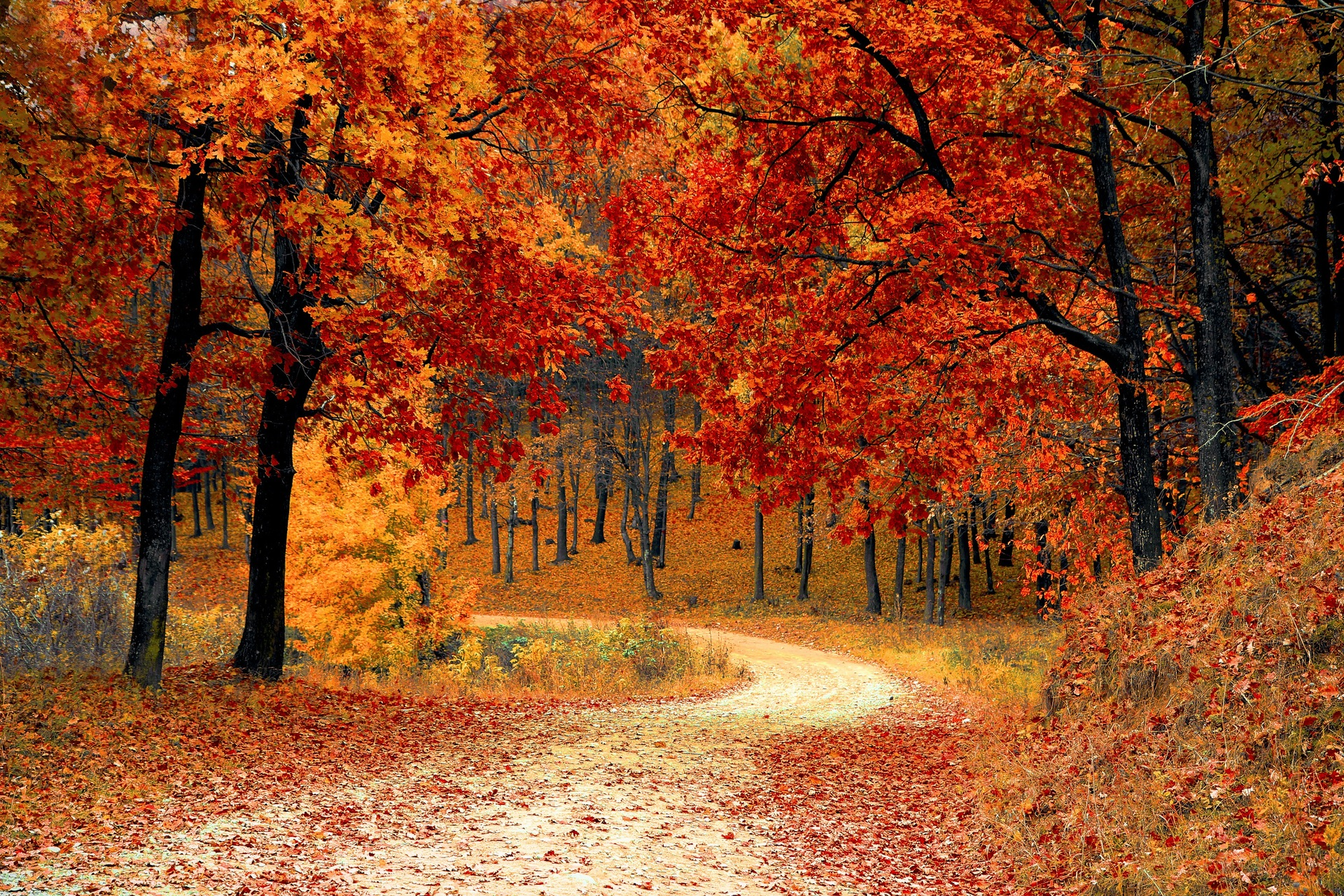 fall-autumn-red-season.jpg