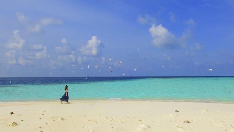 Baros Maldives Sandbank Seabirds