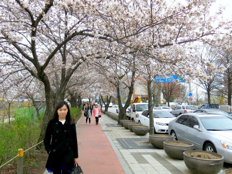 Raevian at Yeouido Hangang Park