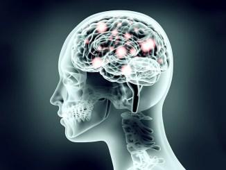 Brain Hardwired