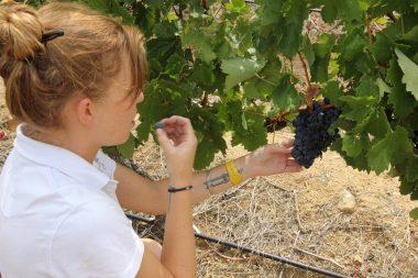 Druk-My-Niet winemaker Alexandra McFarlane Sonia Cabano blog eatdrinkcapetown