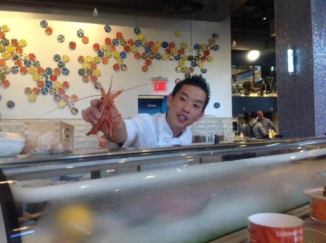 blue_shrimp