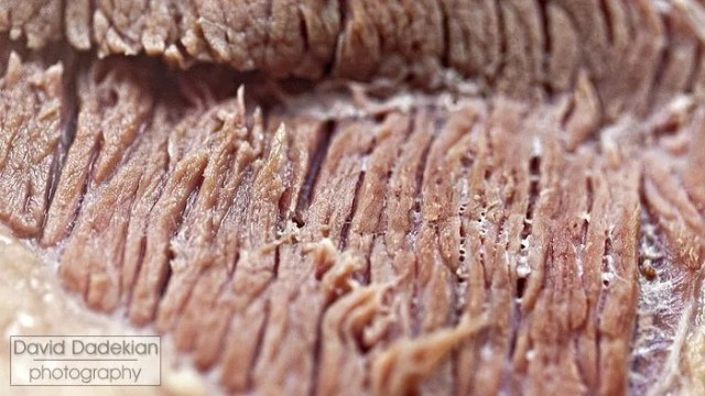 Those same fibers after cooking the brisket