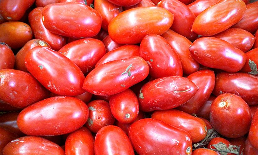 tomato extracts