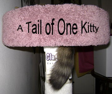 A Tail of One Kitty