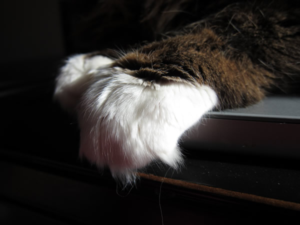 emeril paws