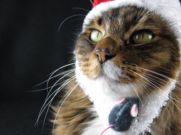 Emeril wearing a santa hat