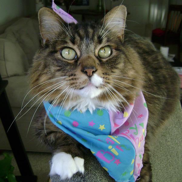 Emeril wearing his birthday scarf