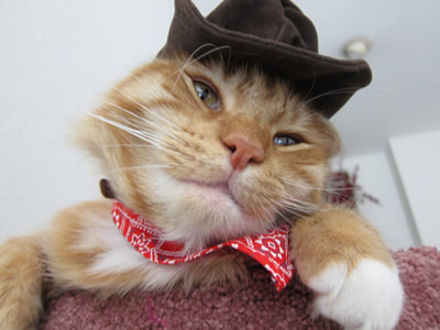 Max in his cowboy costume