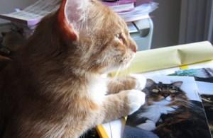 Max sitting on my desk
