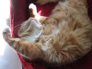 max napping