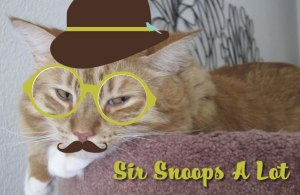Sir Snoops A Lot