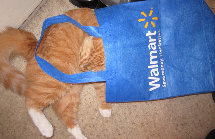 Max and his Walmart Bag