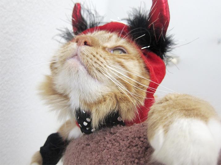 Max in his devil halloween costume