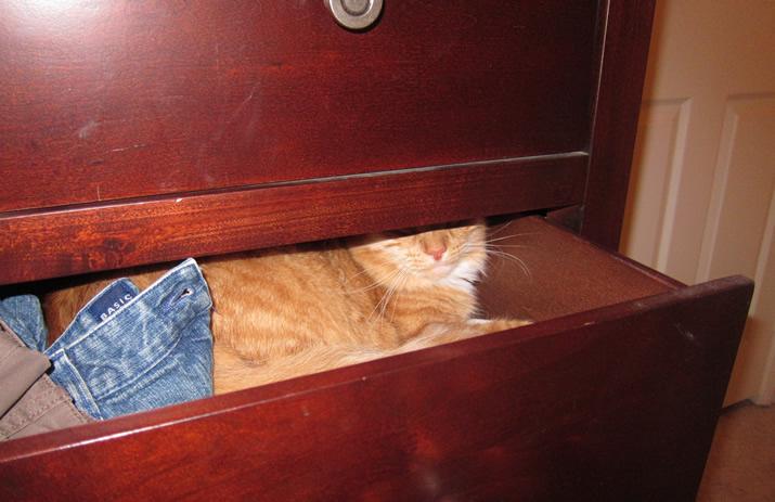 Max in the dresser