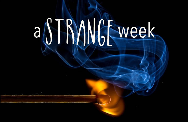 A Strange Week | www.EatLaughPurr.com