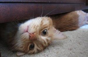 Max under the dresser