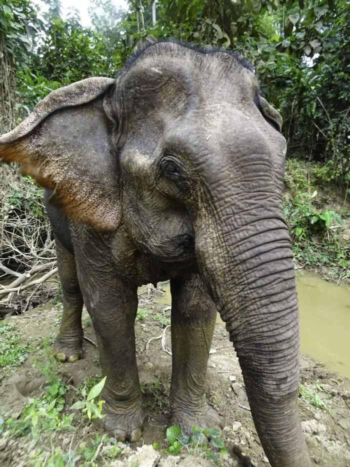 Responsible no riding elephant experience at Mandalao Tours, Luang Prabang